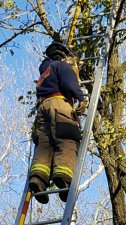 Cat Rescue From Tree